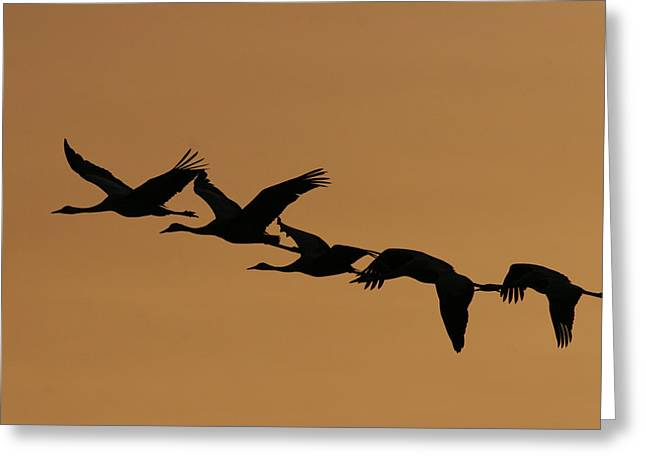 """""""nature Image"""" Pyrography Greeting Cards - Bird In Imgration Greeting Card by Alon Meir"""