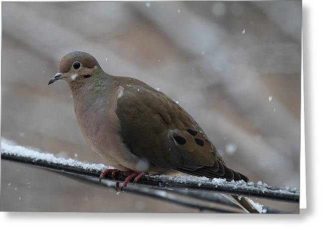Birding Photographs Greeting Cards - Bird In Snow - Animal - 011310 Greeting Card by DC Photographer