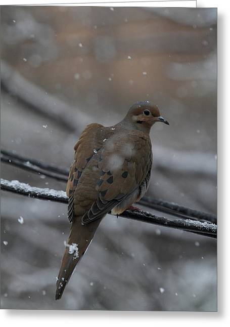 Fly Greeting Cards - Bird In Snow - Animal - 01132 Greeting Card by DC Photographer