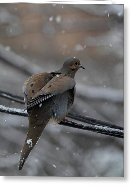 Fly Greeting Cards - Bird In Snow - Animal - 01133 Greeting Card by DC Photographer
