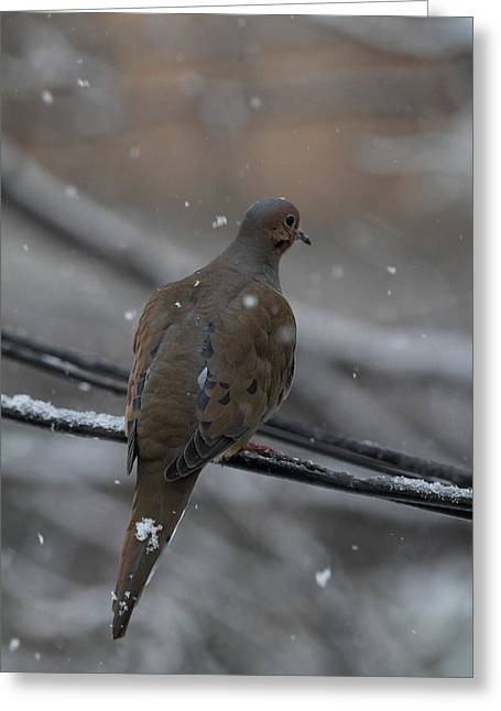 Bird In Snow - Animal - 01134 Greeting Card by DC Photographer