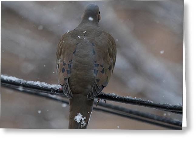 Bird In Snow - Animal - 01135 Greeting Card by DC Photographer