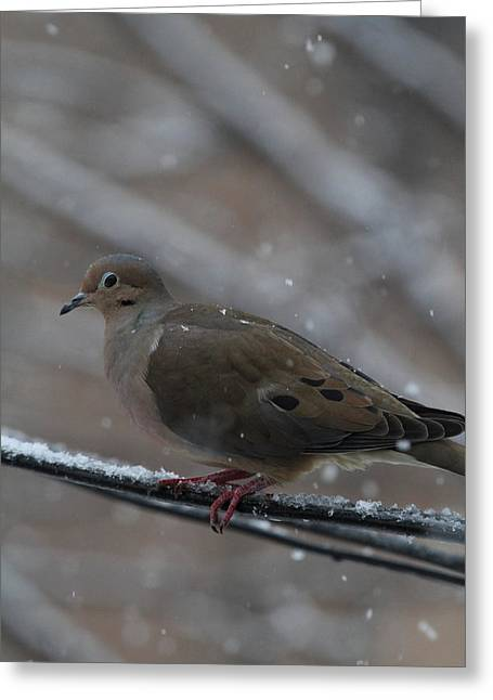 Feathers Greeting Cards - Bird In Snow - Animal - 01136 Greeting Card by DC Photographer