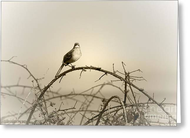 Songbird Prints Greeting Cards - Bird in the Briar Greeting Card by Artist and Photographer Laura Wrede