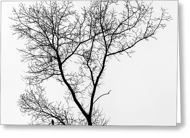 Winter Crows Greeting Cards - Bird in Tree Greeting Card by Wim Lanclus