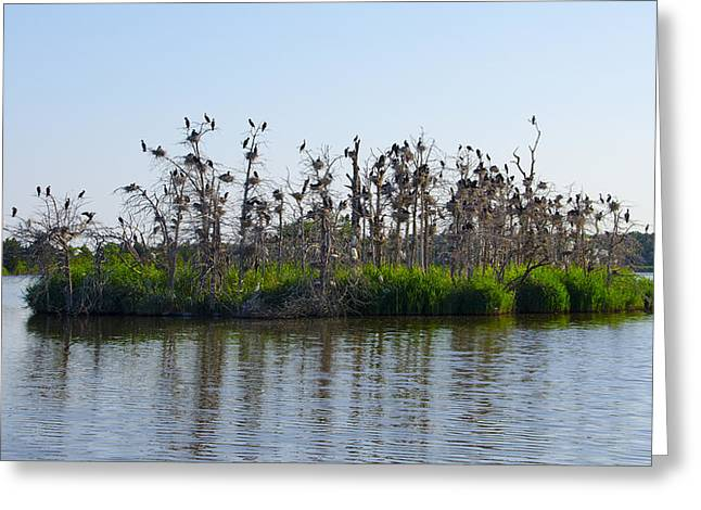 Twp Birds Greeting Cards - Bird Island Greeting Card by Bill Cannon