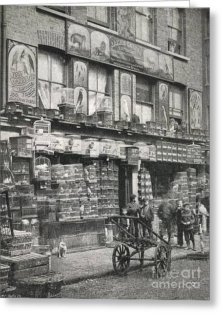 Sociology Greeting Cards - Bird Market, London, 1890s Greeting Card by British Library