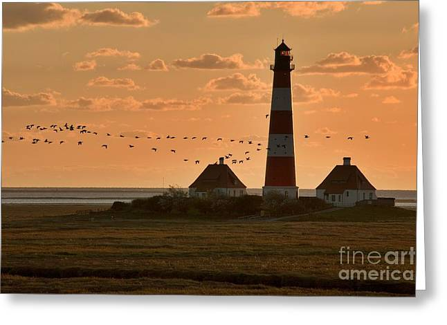 North Sea Greeting Cards - Bird Migration at Westerhever Lighthouse  Greeting Card by Heiko Koehrer-Wagner