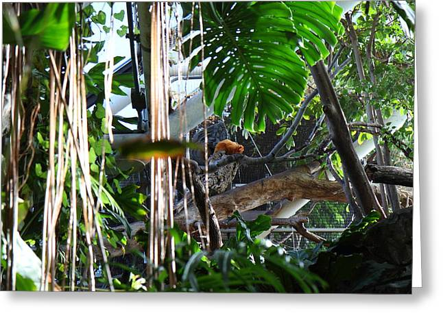 Attraction Photographs Greeting Cards - Bird - National Aquarium in Baltimore MD - 12121 Greeting Card by DC Photographer