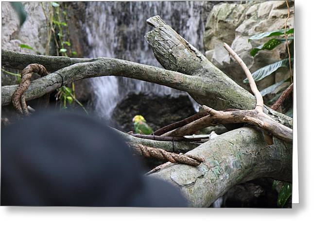 Landmark Greeting Cards - Bird - National Aquarium in Baltimore MD - 121212 Greeting Card by DC Photographer