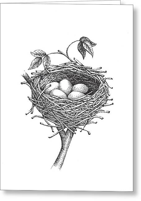White Drawings Greeting Cards - Bird Nest Greeting Card by Christy Beckwith