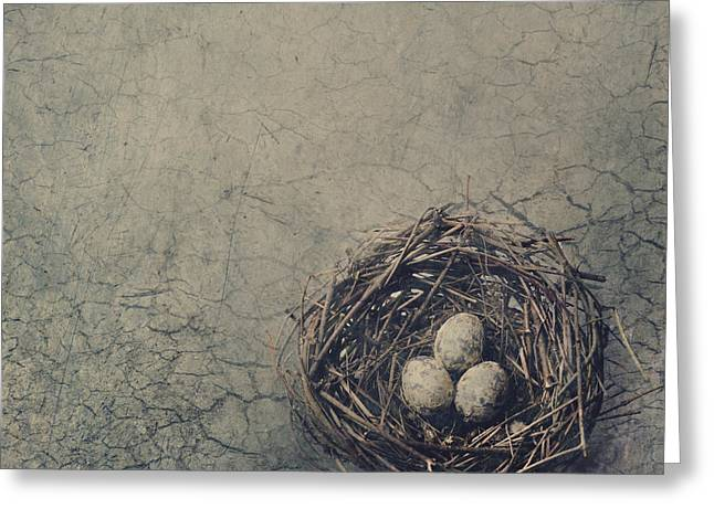 Cracked Eggs Greeting Cards - Bird Nest Greeting Card by Jelena Jovanovic