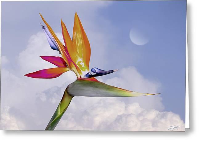 Bird Of Paradise Aloft Greeting Card by Schwartz