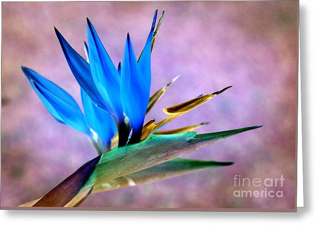 David Birchall Greeting Cards - Bird Of Paradise Bloom Greeting Card by David Birchall