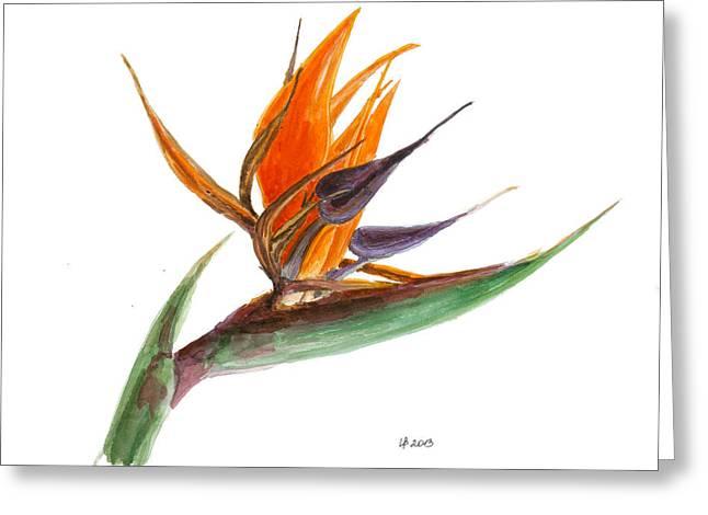 Strelitzia Paintings Greeting Cards - Bird of Paradise Flower 2 Greeting Card by Irina Viatkina