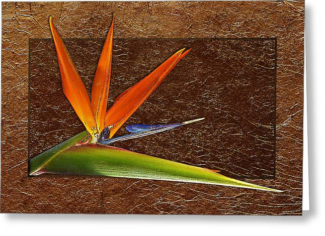 Recently Sold -  - Floral Digital Art Digital Art Greeting Cards - Bird Of Paradise Gold Leaf Greeting Card by Phyllis Denton