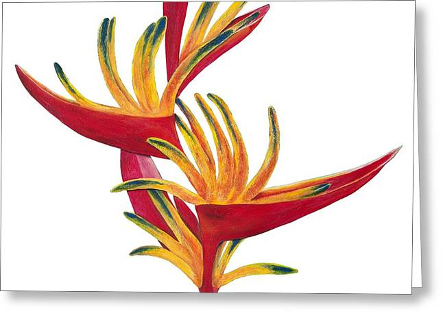 Lisa Bentley Greeting Cards - Bird of Paradise II Greeting Card by Lisa Bentley