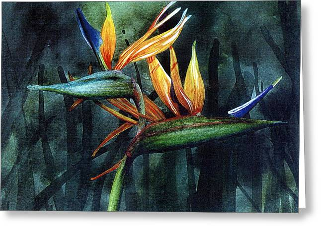Bird Of Paradise Greeting Card by John Christopher Bradley