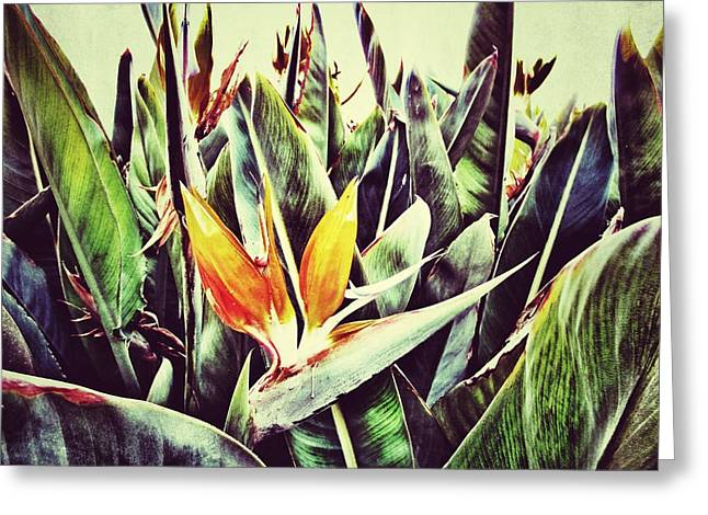 Strelitzia Greeting Cards - Bird of Paradise Greeting Card by Marianna Mills