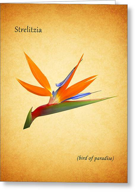 Bird Of Paradise Greeting Card by Mark Rogan