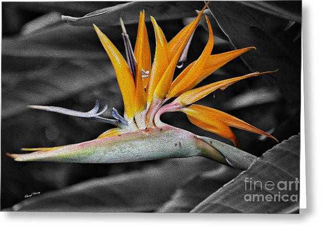 Strelitzia Greeting Cards - Bird of Paradise painted Greeting Card by Cheryl Young