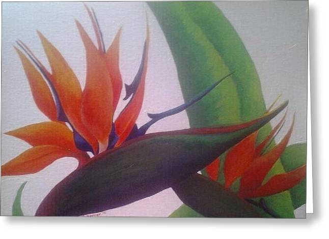 Hawii Greeting Cards - Bird of Paradise Greeting Card by Shannon Bernier-Williamson