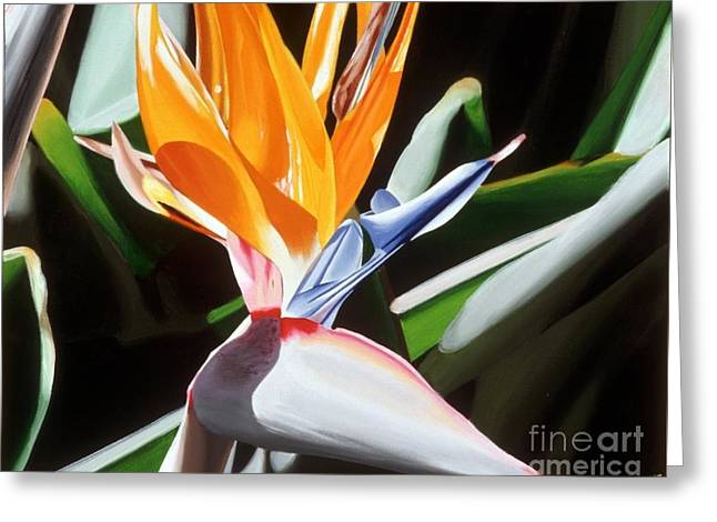 Paradise Road Paintings Greeting Cards - Bird of Paradise Greeting Card by Sharon Von Ibsch