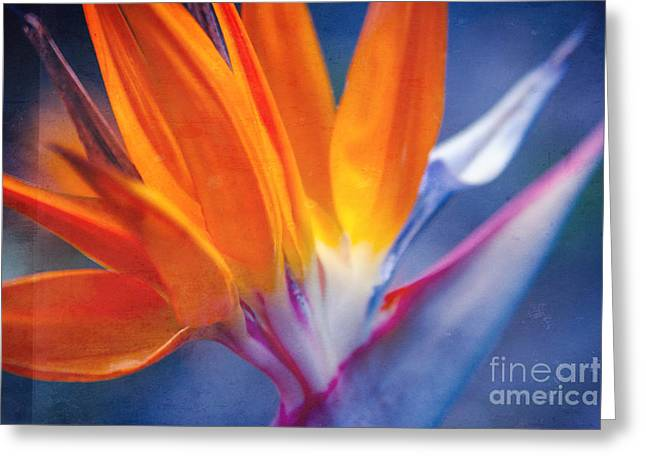 Regina Greeting Cards - Bird of Paradise - Strelitzia reginae - Crane Flower Maui Hawaii Greeting Card by Sharon Mau