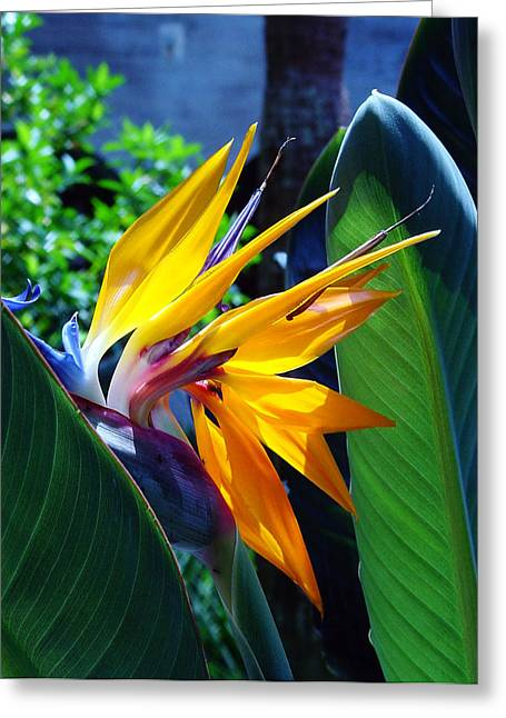 Southern Flowers Greeting Cards - Bird of Paradise Greeting Card by Susanne Van Hulst
