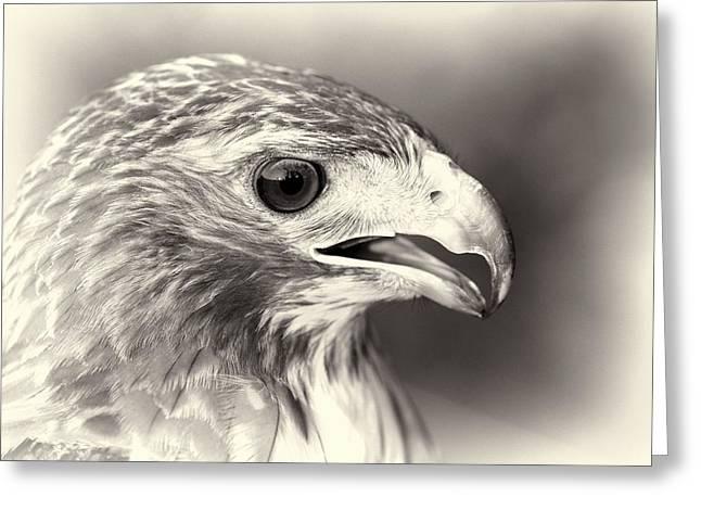 Hawk Greeting Cards - Bird Of Prey Greeting Card by Dan Sproul