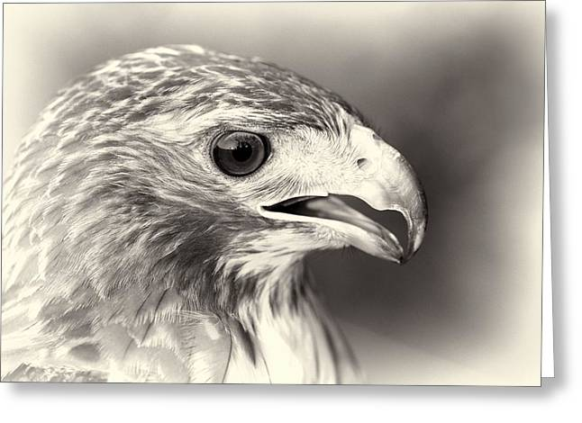 Bird Of Prey Greeting Card by Dan Sproul
