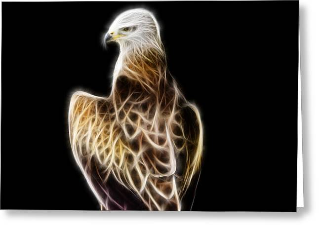 Bird Of Prey Greeting Card by Pati Photography