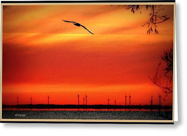 Bird Of Sunrise Greeting Card by Donna Brown