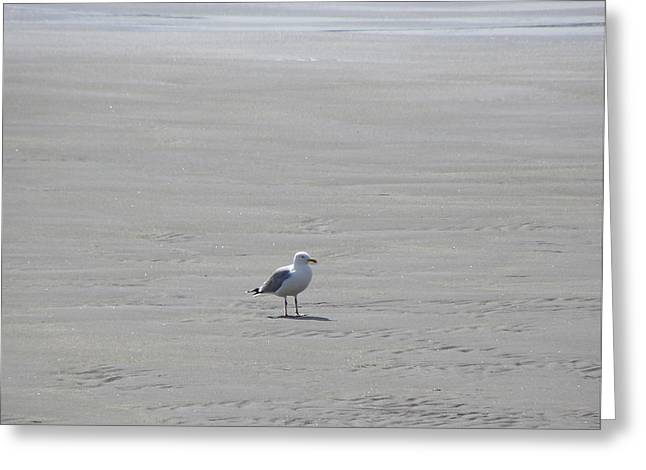 Lone Gull Greeting Cards - Bird On A Beach Greeting Card by Denise Mazzocco