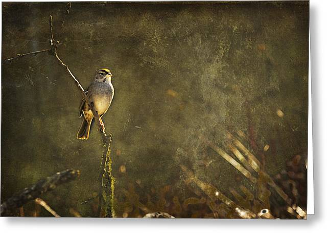Brown Towhee Greeting Cards - Bird on a Branch Greeting Card by Belinda Greb
