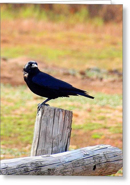 Mickey Harkins Greeting Cards - Bird on a Post Greeting Card by Mickey Harkins