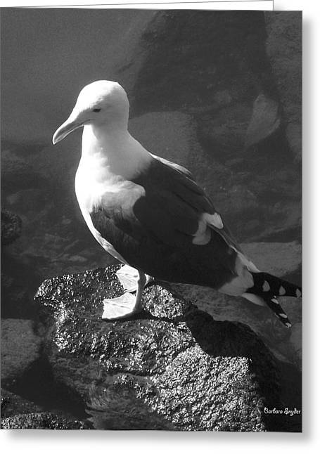 Seabirds Digital Art Greeting Cards - Bird On A Rock  Greeting Card by Barbara Snyder