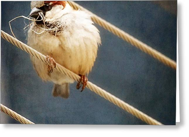 Gift Ideas For Him Greeting Cards - Bird on a Wire  Greeting Card by Amelia Kay Photography