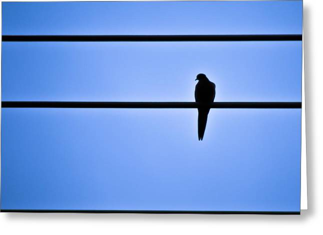 Lonesome Dove Greeting Cards - Bird on a Wire Greeting Card by Kesh Brown