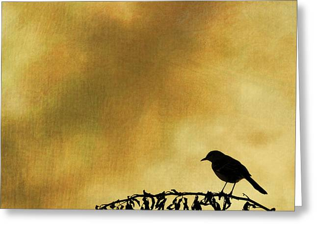 Bird On Branch Montage Greeting Card by David Gordon