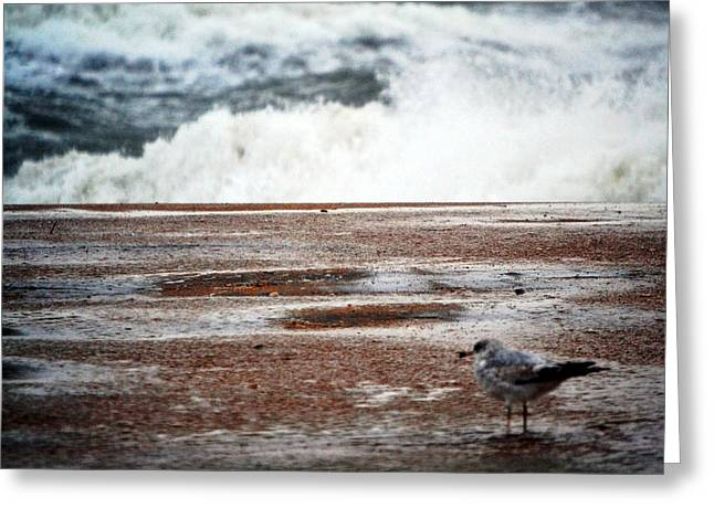 Stormy Weather Mixed Media Greeting Cards - Bird On The Beach Greeting Card by Gustave Kurz