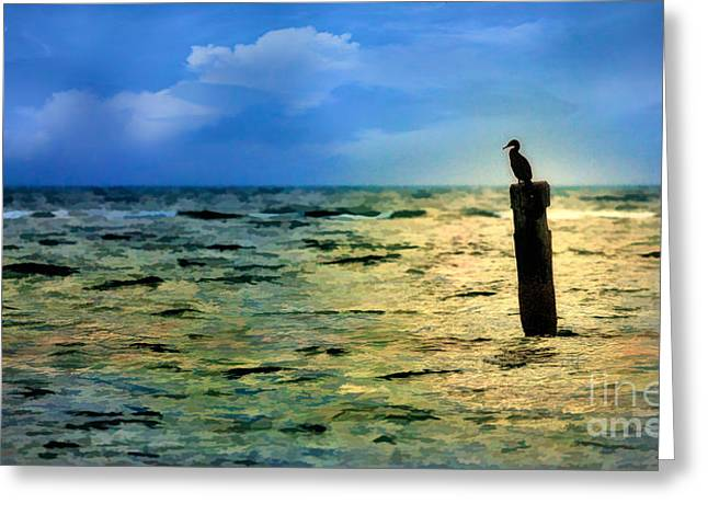 Paint Photograph Greeting Cards - Bird on the Ocean - Outer Banks Seascape Greeting Card by Dan Carmichael