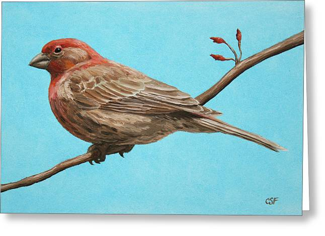 Bird Painting - House Finch Greeting Card by Crista Forest