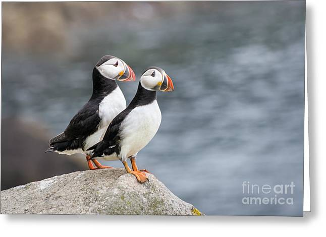 Puffins Greeting Cards - Bird Paradise Greeting Card by Evelina Kremsdorf