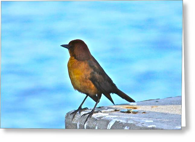 Cedar Key Greeting Cards - Bird ready to dive for food Greeting Card by Lorna Maza