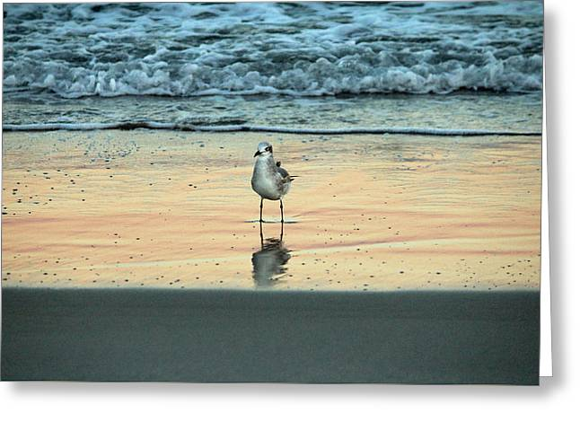 Sea Birds Greeting Cards - Bird Reflection Greeting Card by Cynthia Guinn
