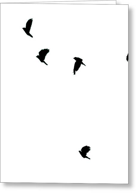 Digitalart Greeting Cards - Bird Shadows Greeting Card by Martin Newman