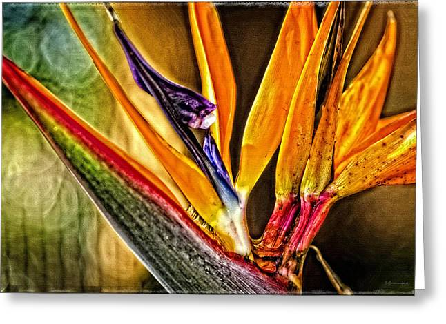 Floral Photographs Greeting Cards - Bird Talk - Bird of Paradise by Sharon Cummings Greeting Card by Sharon Cummings