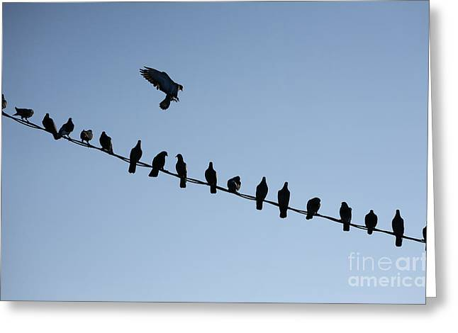 Bird On A Wire Greeting Cards - Bird Wire Greeting Card by John Greim