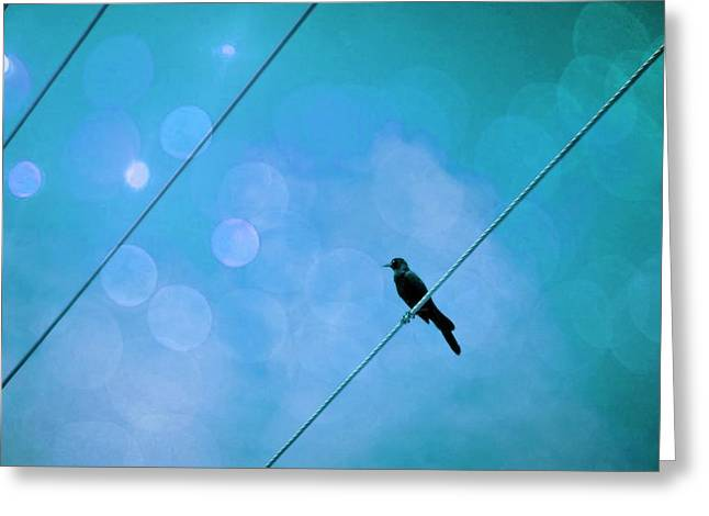 Downtown Portland Greeting Cards - Bird with bokeh Greeting Card by Cathie Tyler